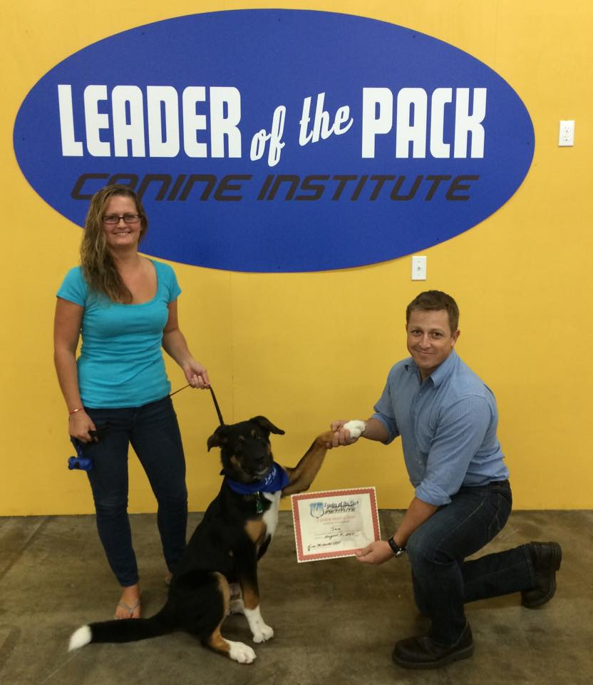 Jax's Dog Training Certificate in Allentown, PA